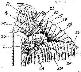 Nervio motor ocular externo o abducens for Cuarto par craneal